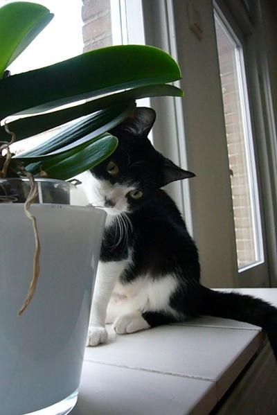 Mika op de vensterbank